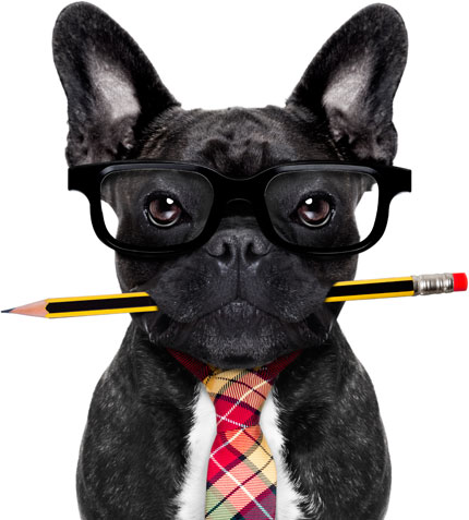 Dog wearing glasses and tie with pencil in its mouth